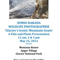 5-25-13_GlacierMountainGoats